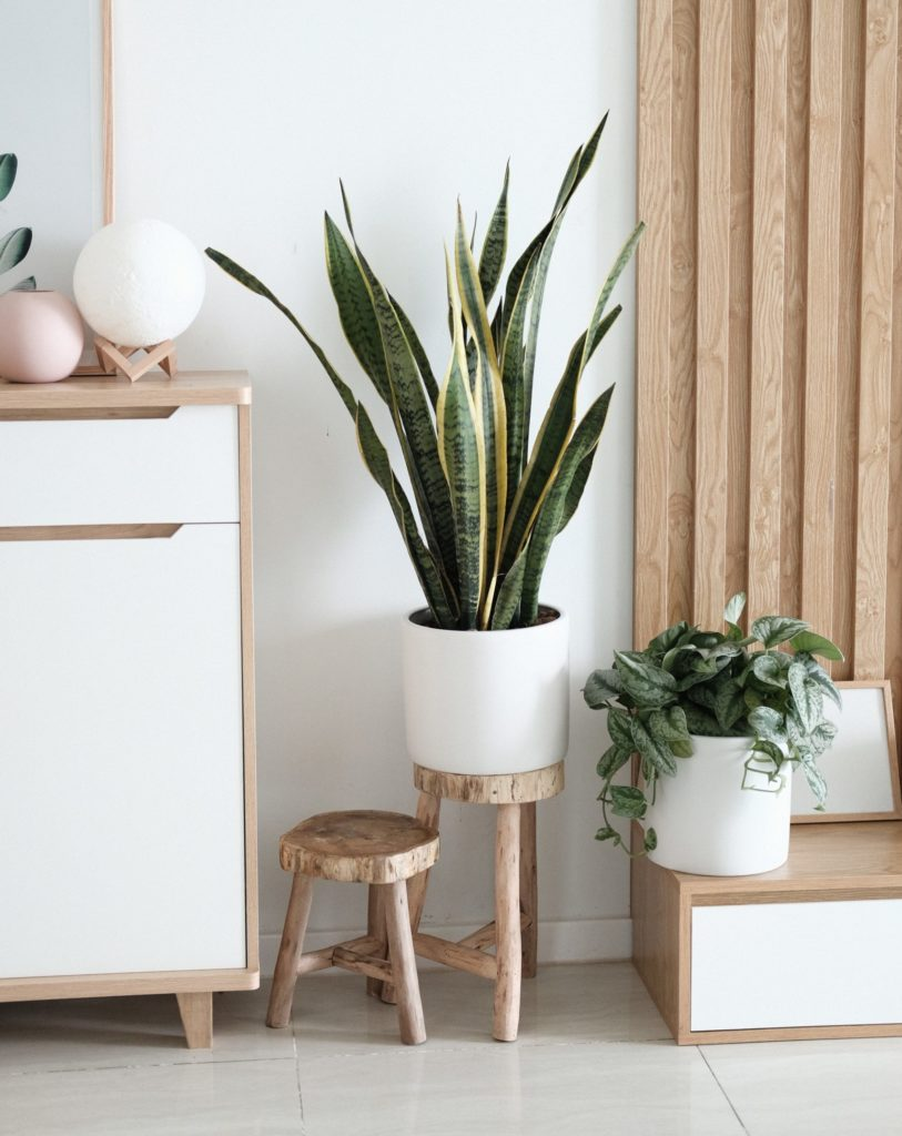 Wolf Global_Instagrammable House Plants_1