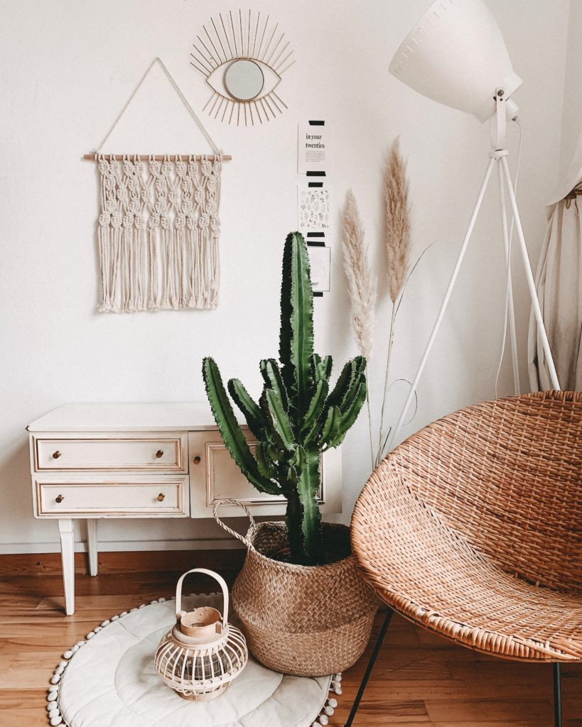 Wolf Global_Instagrammable House Plants_Cactus