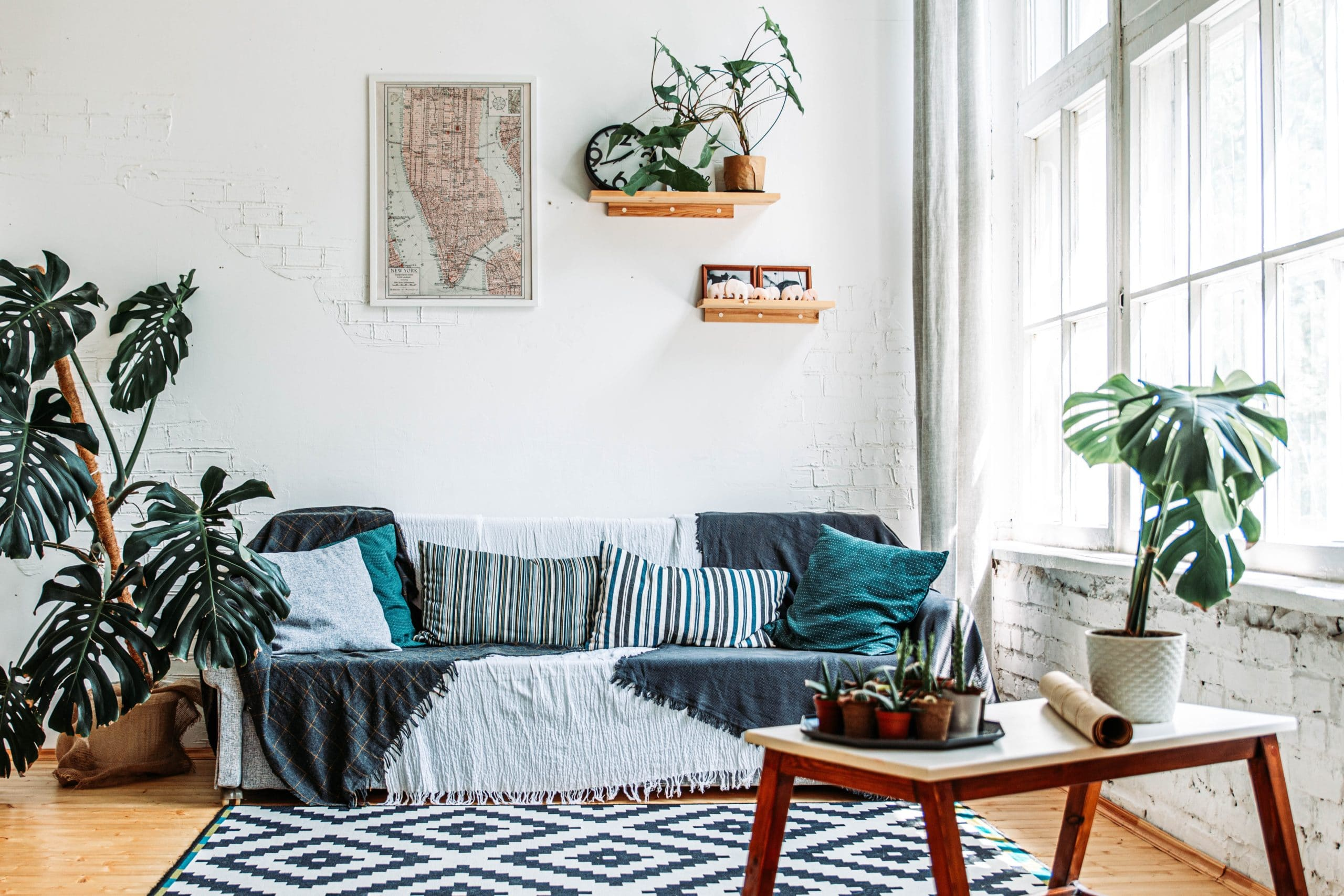 Top 10 Most Instagrammable House Plants