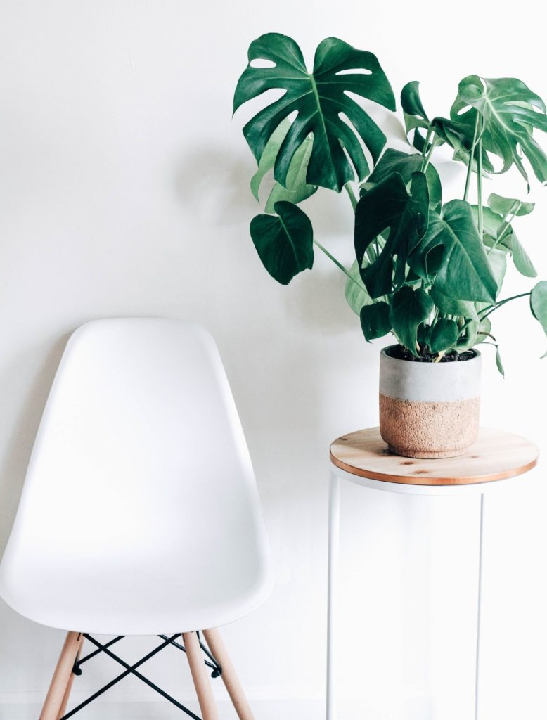 Wolf Global_Instagrammable House Plants_Monstera