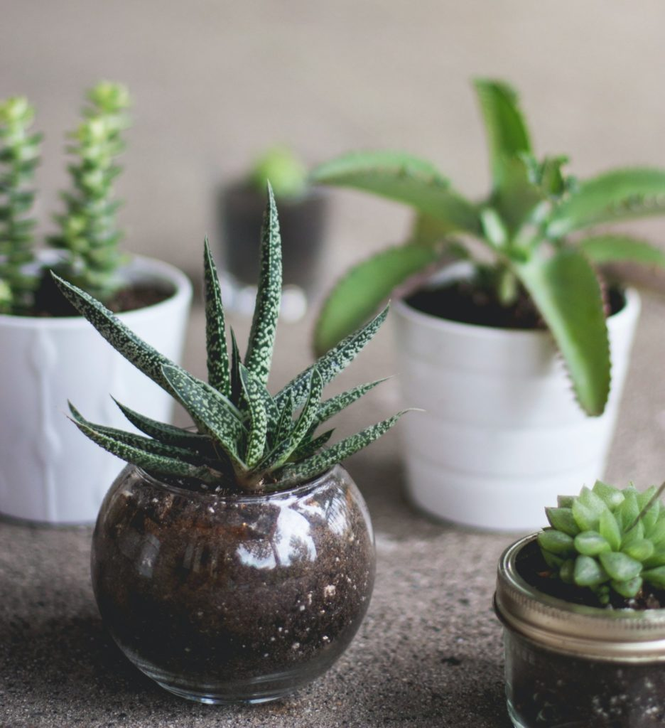 Wolf Global_Instagrammable House Plants_Succulents