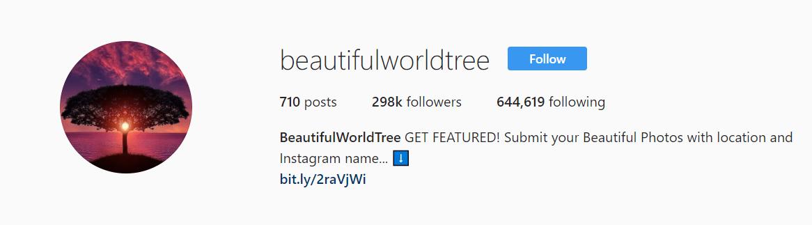 Beautiful World Tree Instagrarm